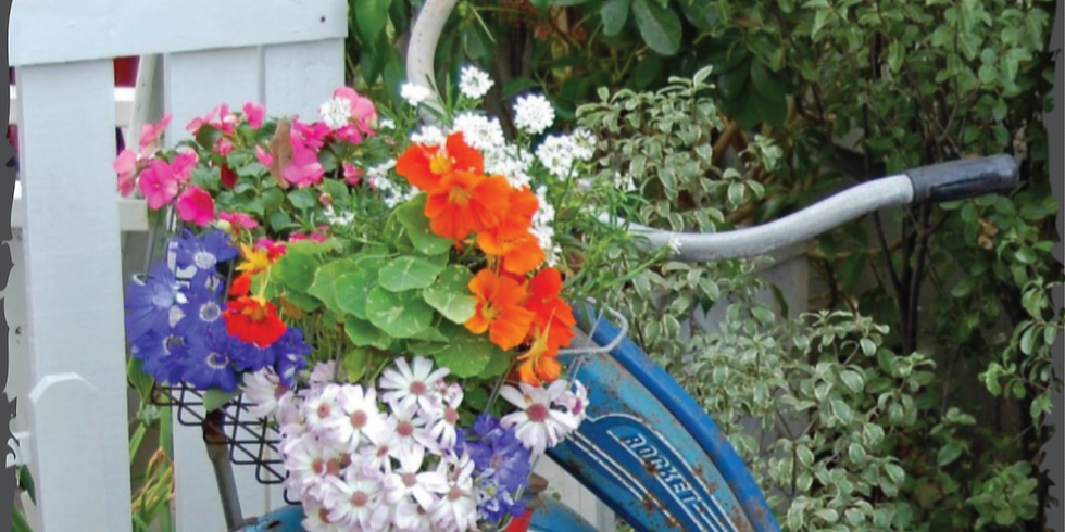 Mother's Day Geraniums - May 12th