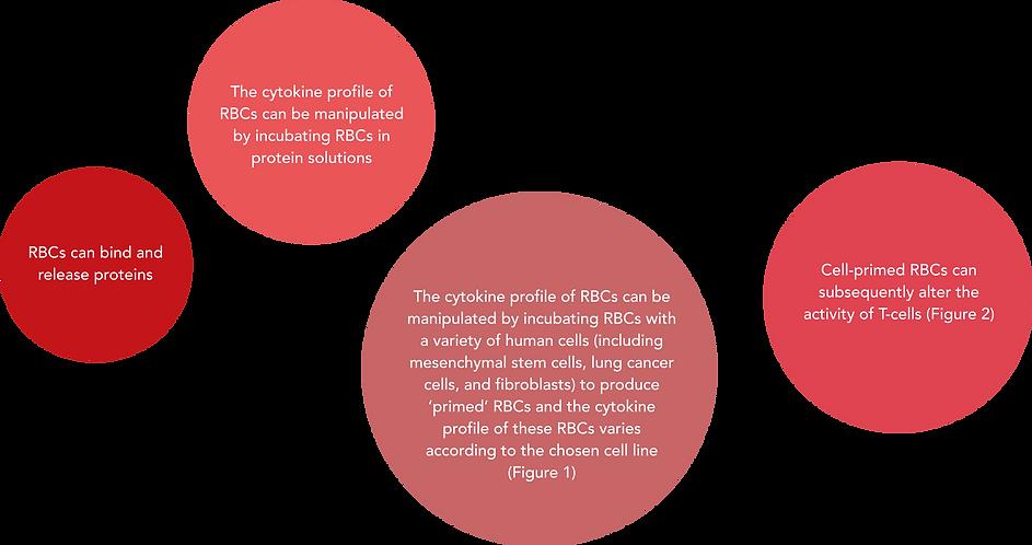 rbc_immunology.png