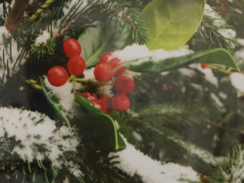 Holly Berries and Snow