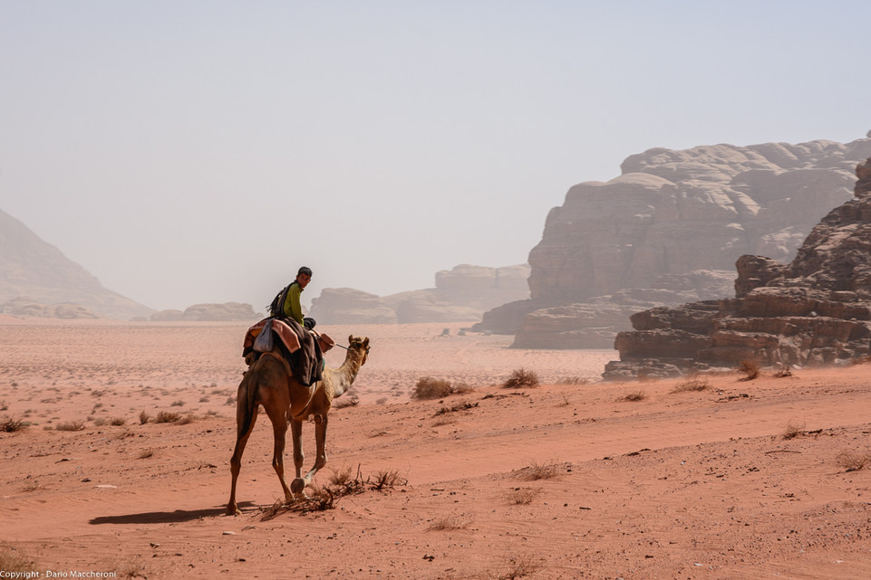 Beduin with Camel - Wadi Rum