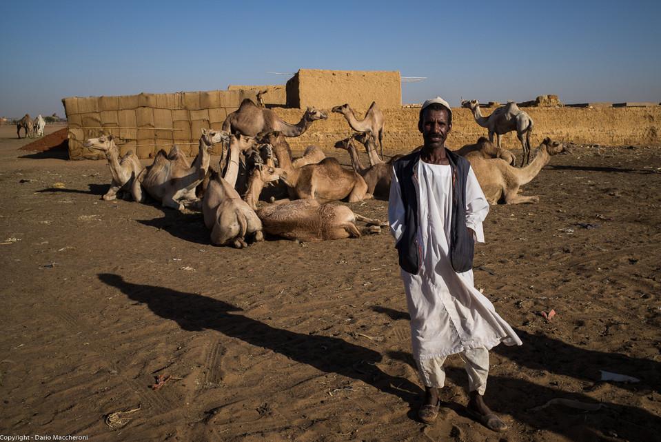 Camels Owner