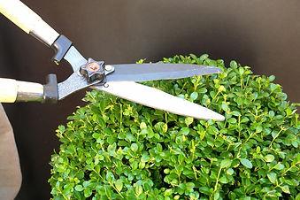 Conseils pour la coupe d'arbustes