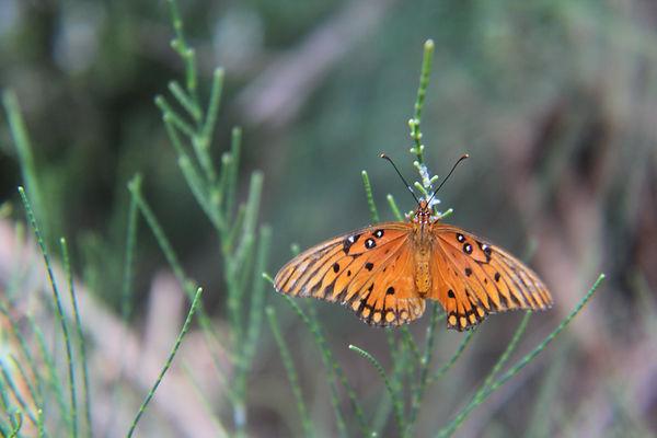 Jonathan Miller Butterfly 2.JPG