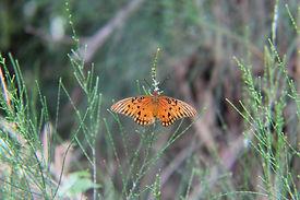 Jonathan Miller Butterfly 1.JPG