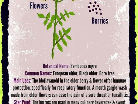 Amazing Elderberry!