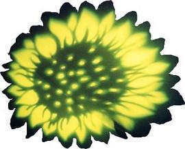 PageImage-507881-4730861-Sunflowershadow