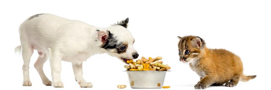Shutterstock-147241436-croquettes-chien-chat-ban.jpg