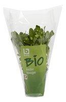 BONI BIO sauge plante 1pc