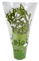 BONI BIO estragon plante 1pc