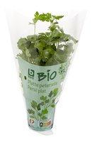 BONI BIO persil plat plante 1pc