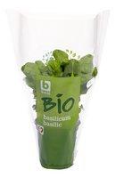 BONI BIO basilic plante 1pc