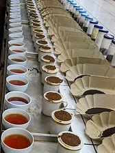 Tasting Mombasa auction.jpg