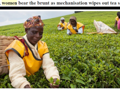 The Clash foresaw the plight of Kenyan tea harvesting back in 1982
