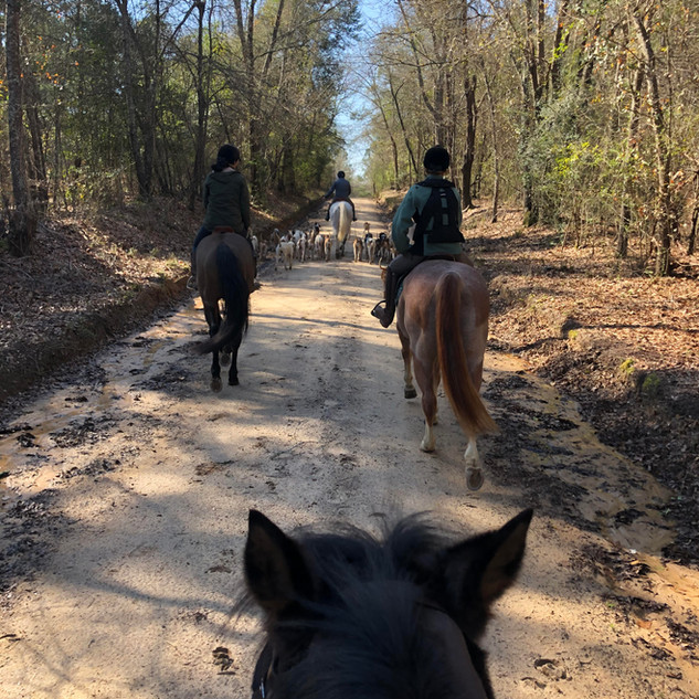 Hound exercise on the sandy trails