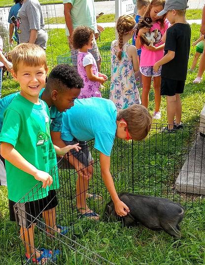 petting zoo 7.jpg