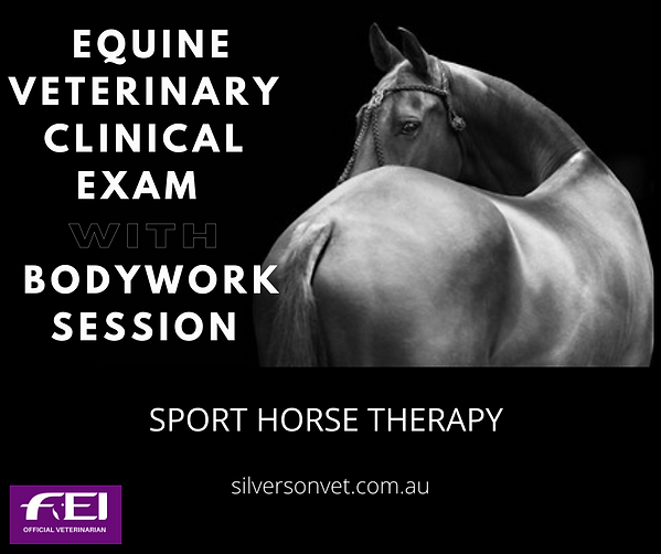 veterinary clinical exam plus equine bod