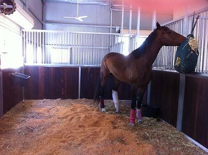 Horse treatment.jpg