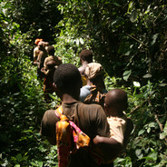 A Carbon Fund to Reduce Deforestation in the Sangha Tri-National Forest, Central Africa