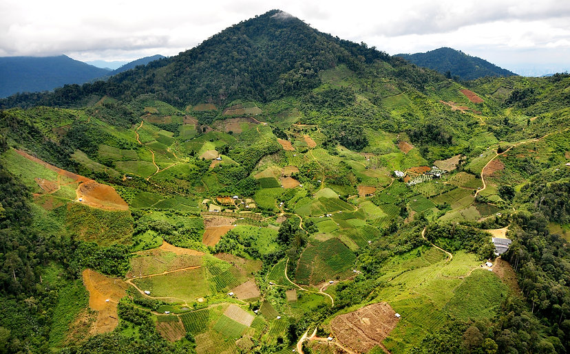 tropical agricultural valley on the moun