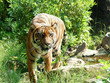 Support to ESMS Application to Projects Funded under Integrated Tiger Habitat Conservation Programme