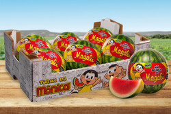 Itaueira - melancia da Magali