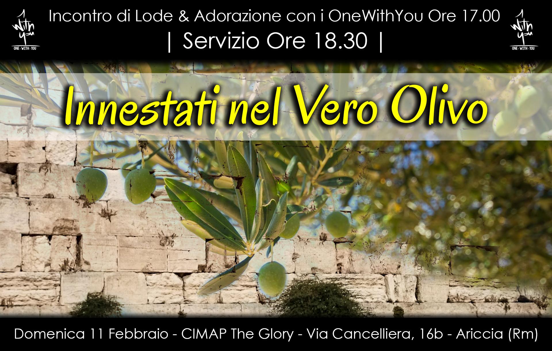 Innestati nel vero olivo