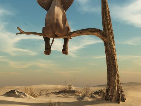 Cyrus Vance, Dyspeptic Elephants, Fire Ant Enemas