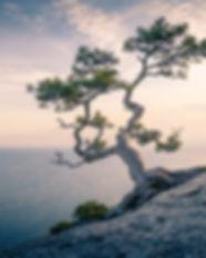 Tree%20Hero%20Homepage_edited.jpg