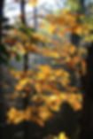 hickory-2890953_1920.jpg