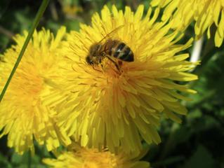 Quatre saisons dans la vie d'un apiculteur