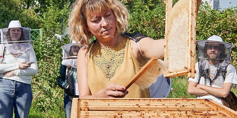 Workshop: Die Welt der Bienen