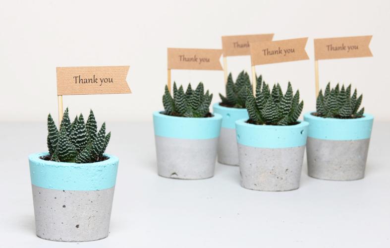 Mini Plantas de estación