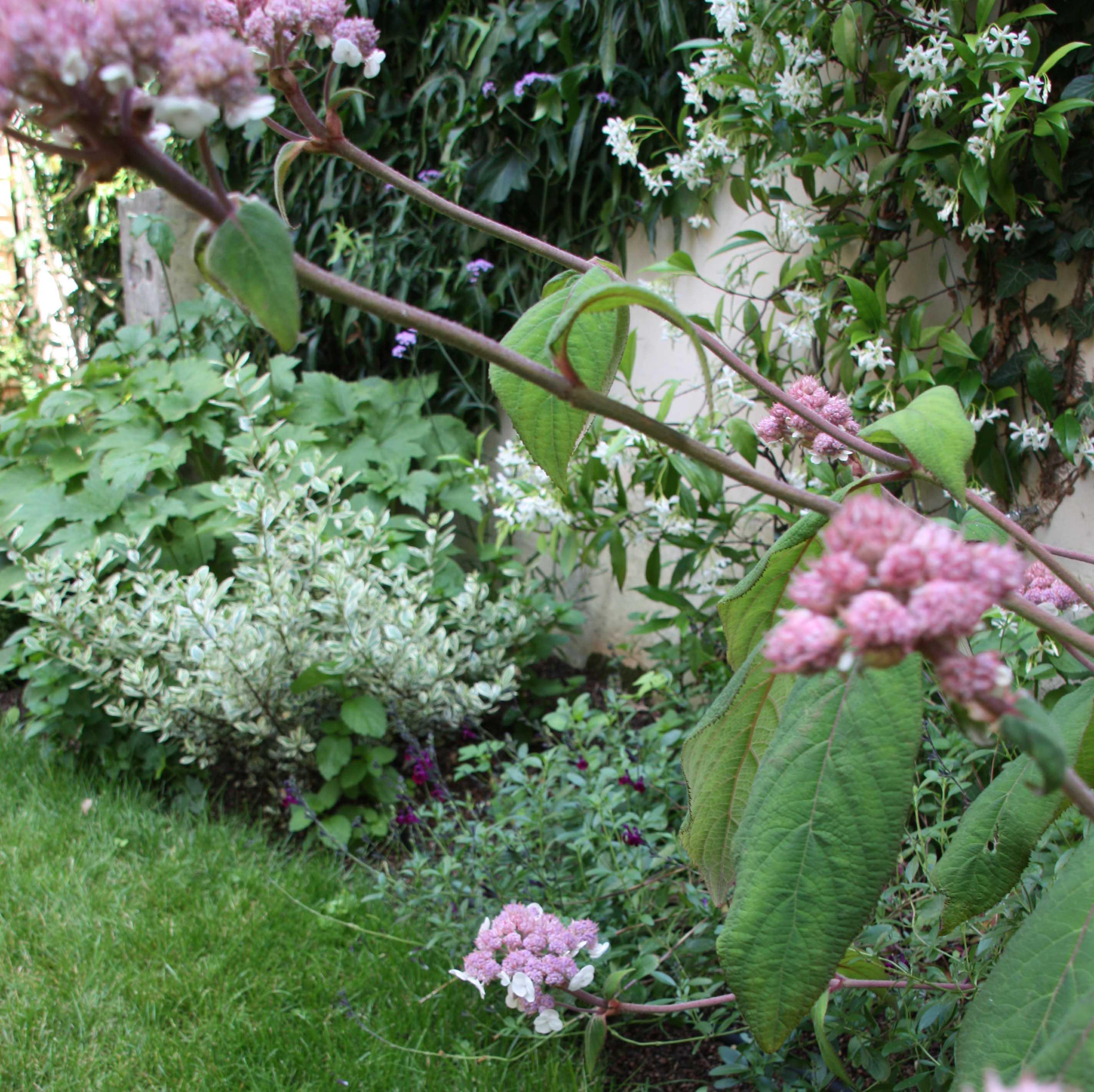 Hydrangea, Salvia etc