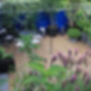 Terrasse à l'abri des regards, pergola et jasmins sur fond de bleu Klein