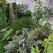 Un écrin de verdure en ville, Fougères, Carex et Pigamon