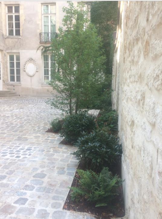 Cour pavée parisienne , plantation plein