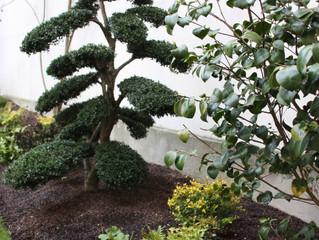 Structure hivernale: ilex, fougères et camélia