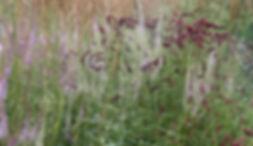 Jardin sauvage et bucolique.jpg