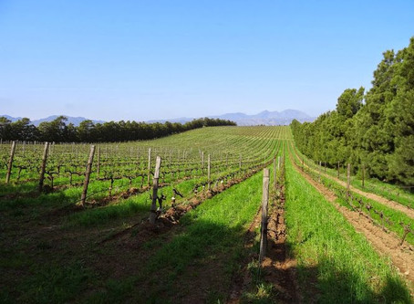 What is the Difference Between Sustainable, Organic and Biodynamic Wine?