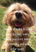 Obedience Dog Club