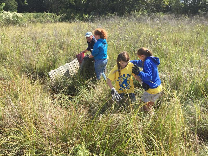 Marsh Combing