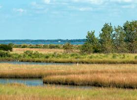 Coastal Marshes