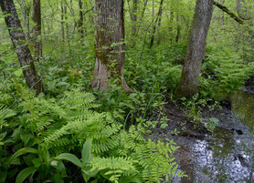 Hickory Hollow Spring Clean Up, Apr. 7