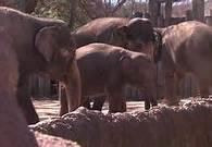 NBC5 Interviews Robert Chadwick After OSHA Cites Fort Worth Zoo