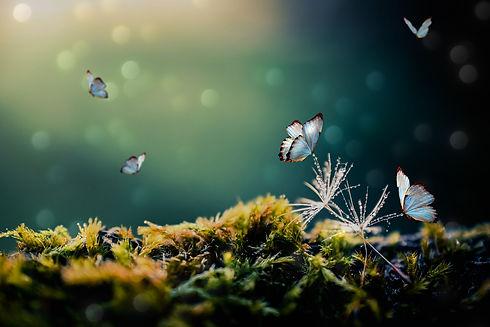 butterflies-5678629_1920.jpg