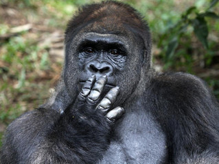 Cybersecurity Regulation And Litigation: The 800 Pound Gorilla In The Boardroom
