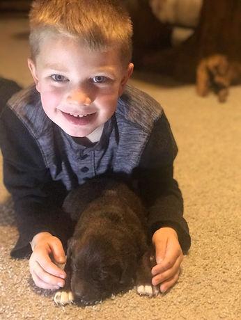 Fix Labs black labrador puppy with child