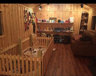 Fix Labs Labrador Retriever Puppies puppy house rustic indoor view
