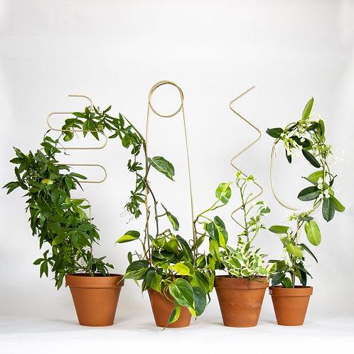 Plantensteun | Botanopia