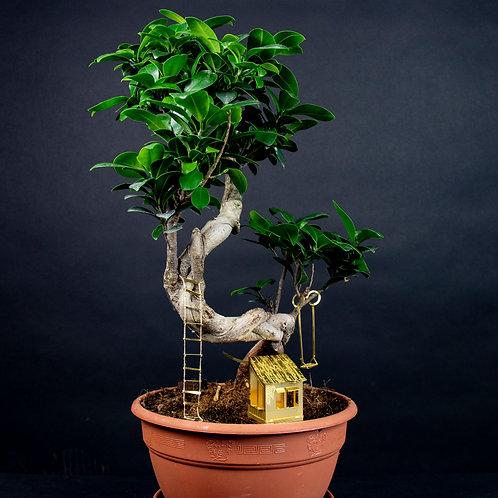 Plantminiatuur | Boomhut | Botanopia